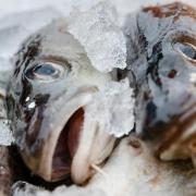 Dorschfang in der Ostsee