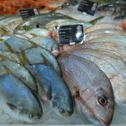 Fischangebot