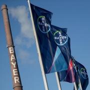 Bayer-Flaggen